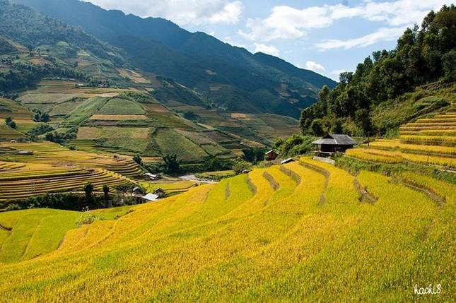 Đẹp mê hồn những cánh đồng lúa miền Bắc vào mùa gặt - anh 4