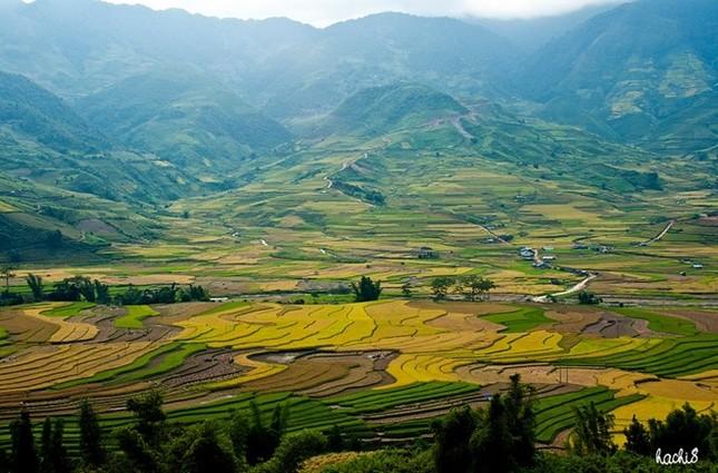 Đẹp mê hồn những cánh đồng lúa miền Bắc vào mùa gặt - anh 5