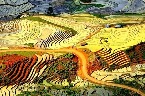Đẹp mê hồn những cánh đồng lúa miền Bắc vào mùa gặt - anh 7