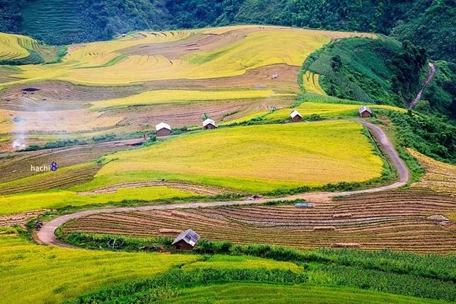 Đẹp mê hồn những cánh đồng lúa miền Bắc vào mùa gặt - anh 8
