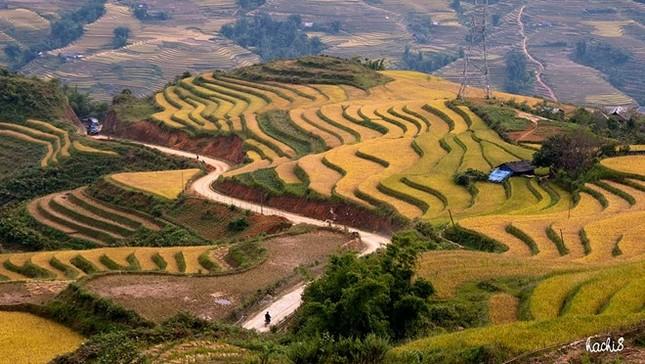 Đẹp mê hồn những cánh đồng lúa miền Bắc vào mùa gặt - anh 9