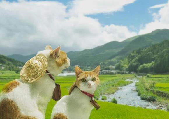 """Hài hước bộ ảnh dắt nhau đi du lịch của """"đôi tình nhân"""" mèo - anh 1"""