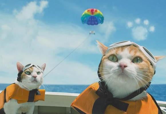 """Hài hước bộ ảnh dắt nhau đi du lịch của """"đôi tình nhân"""" mèo - anh 10"""