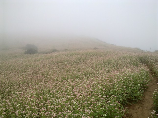 Đẹp ngỡ ngàng mùa tam giác mạch ở Hà Giang - anh 5