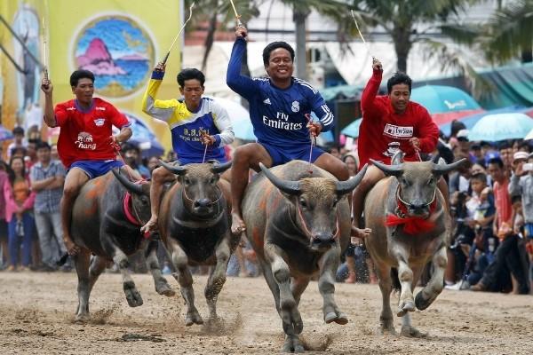 Độc đáo lễ hội đua trâu náo nhiệt ở Thái Lan - anh 3