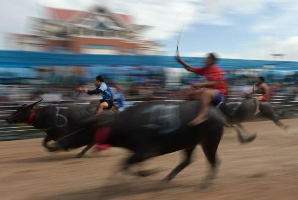 Độc đáo lễ hội đua trâu náo nhiệt ở Thái Lan - anh 5
