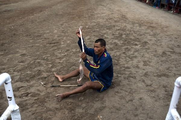 Độc đáo lễ hội đua trâu náo nhiệt ở Thái Lan - anh 8