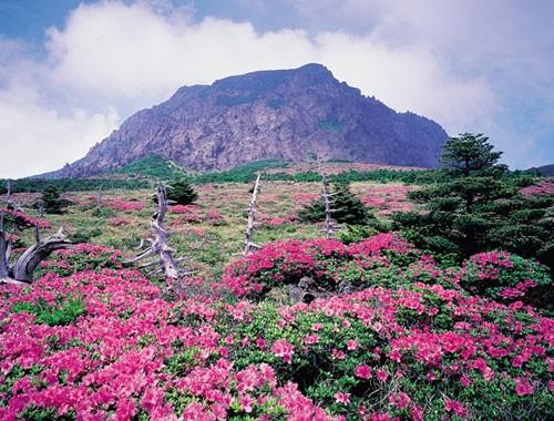 Vịnh Hạ Long lọt top 8 không gian xanh tốt nhất châu Á - anh 2