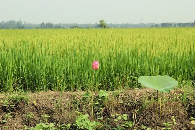 Khám phá vẻ đẹp yên bình của miền sông nước An Giang - anh 1