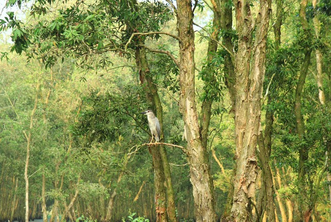 Khám phá vẻ đẹp yên bình của miền sông nước An Giang - anh 8