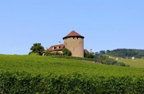 Mê mẩn trước vẻ đẹp tuyệt vời của đồi nho Lavaux - Thụy Sỹ - anh 3