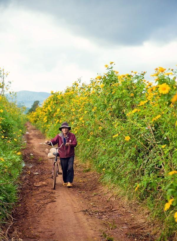 Mê mẩn với sắc vàng rực của hoa dã quỳ đầu đông ở Đà Lạt - anh 7