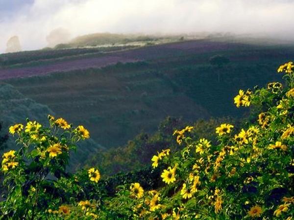 Mê mẩn với sắc vàng rực của hoa dã quỳ đầu đông ở Đà Lạt - anh 8
