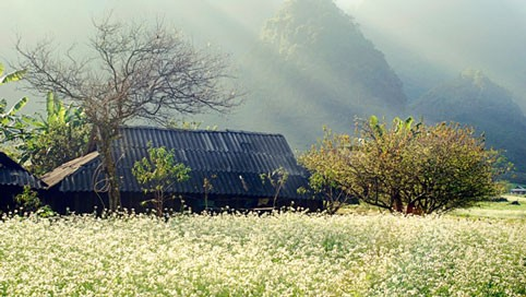 Những hình ảnh đẹp mê hồn của đồng cải Mộc Châu tháng 11 - anh 8