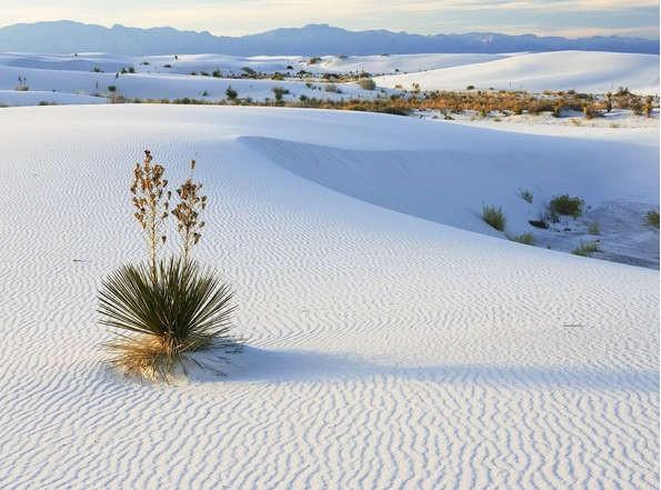Ngất ngây với 5 đồi cát đẹp mê hồn của miền Trung - anh 4