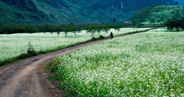 Kinh nghiệm phượt Mộc Châu mùa hoa cải - anh 1