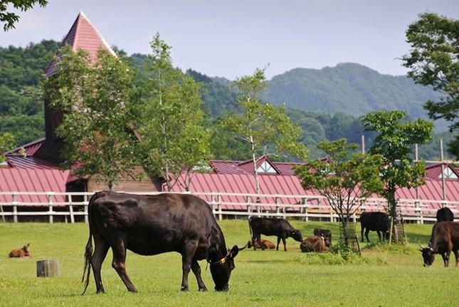 Lý giải nguyên nhân thịt bò Kobe có giá ngàn đô - anh 1