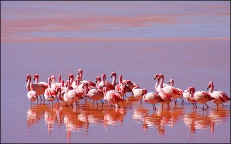 Ngỡ ngàng trước vẻ đẹp cuốn hút của hồ nước đỏ kỳ lạ nhất thế giới - anh 10