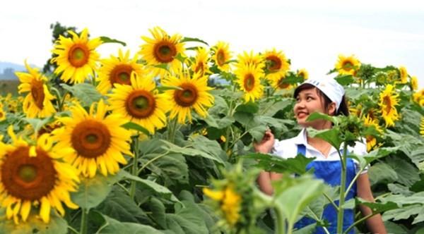 Chân dung nữ chủ nhân nghìn tỉ của cánh đồng hoa hướng dương Nghệ An - anh 3