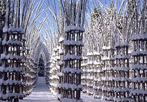 Ngất ngây với nhà thờ tuyệt đẹp bằng ...cây xanh ở Ý - anh 9