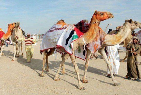 """Độc đáo cuộc thi """"hoa hậu"""" lạc đà ở xứ Ả Rập - anh 1"""