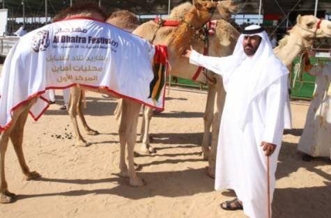 """Độc đáo cuộc thi """"hoa hậu"""" lạc đà ở xứ Ả Rập - anh 3"""