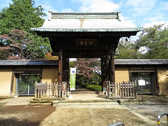 Khám phá ngôi đền của những chú mèo vẫy tay may mắn ở Nhật - anh 2