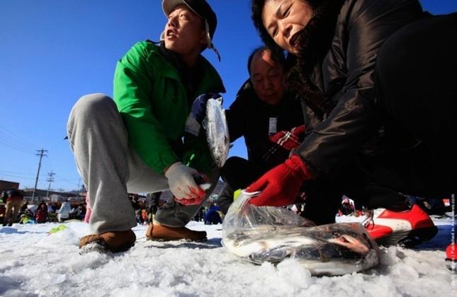 Độc đáo lễ hội câu cá bằng miệng trên băng ở Hàn Quốc - anh 2