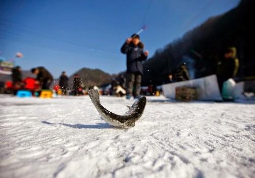 Độc đáo lễ hội câu cá bằng miệng trên băng ở Hàn Quốc - anh 7