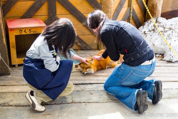 Khám phá ngôi làng của những chú cáo đáng yêu ở Nhật Bản - anh 10