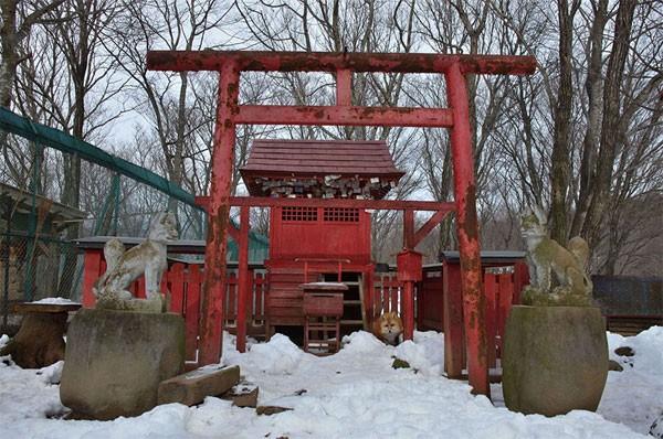 Khám phá ngôi làng của những chú cáo đáng yêu ở Nhật Bản - anh 2
