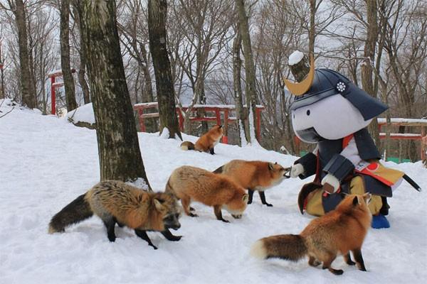 Khám phá ngôi làng của những chú cáo đáng yêu ở Nhật Bản - anh 3