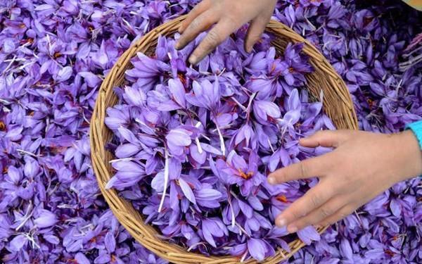 Mê mải ngắm những thiên đường hoa tím đẹp ngất ngây trên thế giới - anh 3