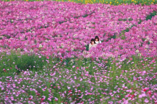 Mê mải ngắm những thiên đường hoa tím đẹp ngất ngây trên thế giới - anh 8