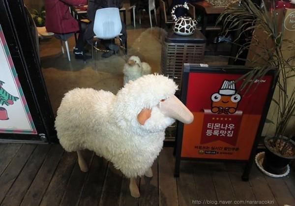 """Độc đáo quán cafe cừu đang """"sốt"""" dịp năm mới ở Hàn Quốc - anh 2"""
