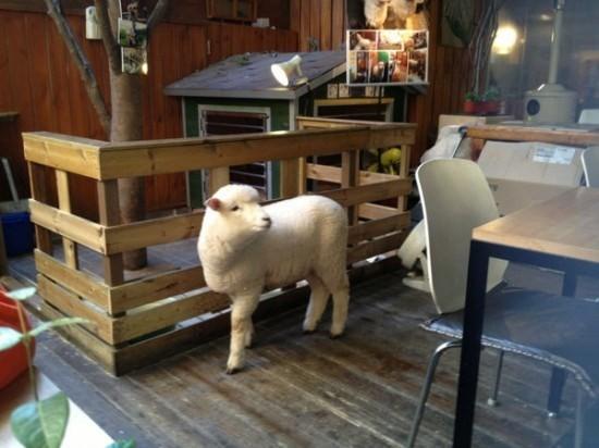 """Độc đáo quán cafe cừu đang """"sốt"""" dịp năm mới ở Hàn Quốc - anh 3"""