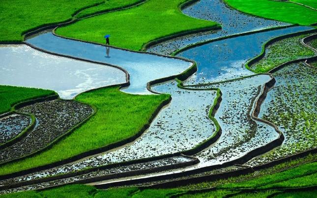 Ruộng bậc thang Việt Nam lọt Top 10 cảnh đẹp thế giới nên đến một lần trong đời - anh 6