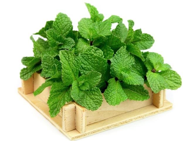 Top 3 loại rau thơm quen thuộc gây yếu sinh lý phái mạnh cần tránh xa - anh 3