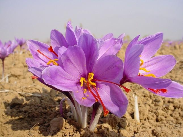 Tuyệt chiêu chữa bệnh bằng hoa của người Ấn Độ - anh 1