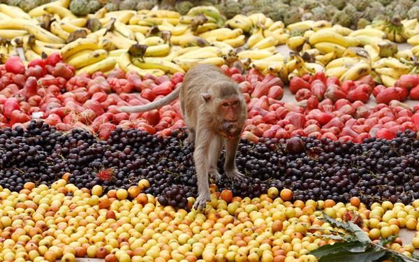 Độc đáo đại tiệc buffet cho khỉ ở Thái Lan - anh 1