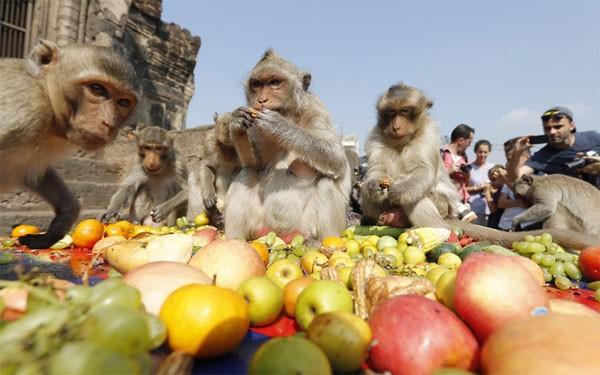 Độc đáo đại tiệc buffet cho khỉ ở Thái Lan - anh 3
