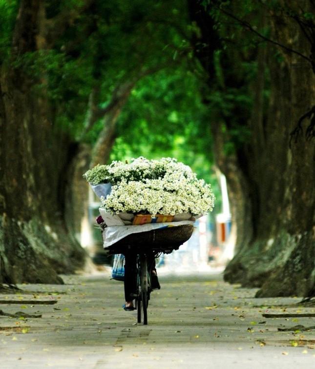 Nao lòng ngắm cúc hoạ mi đầu đông ở Hà Nội - anh 3