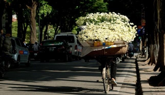Nao lòng ngắm cúc hoạ mi đầu đông ở Hà Nội - anh 8