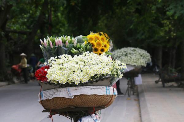 Nao lòng ngắm cúc hoạ mi đầu đông ở Hà Nội - anh 9