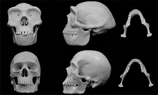 Khuôn mặt con người tiến hóa để... ăn đấm - anh 2