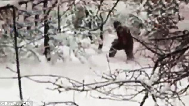 """Các nhà khoa học Nga tình cờ bắt gặp """"người tuyết Yeti"""" trong rừng - anh 1"""