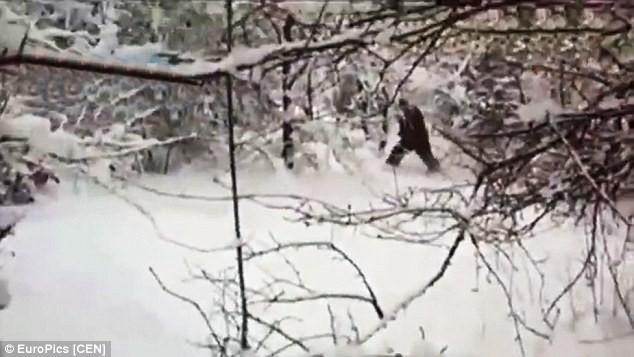 """Các nhà khoa học Nga tình cờ bắt gặp """"người tuyết Yeti"""" trong rừng - anh 2"""