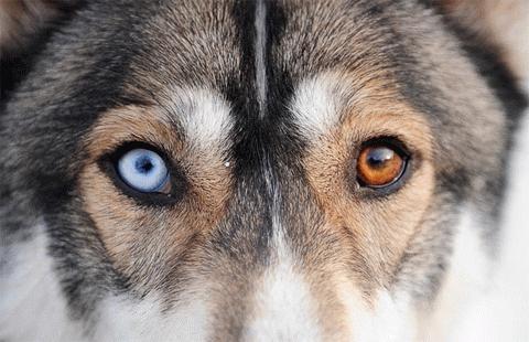 Những phát hiện bất ngờ về loài vật trung thành nhất thế giới - anh 3
