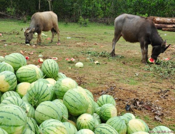 Điểm lại những nông sản khiến nông dân điêu đứng trong 3 tháng qua - anh 1