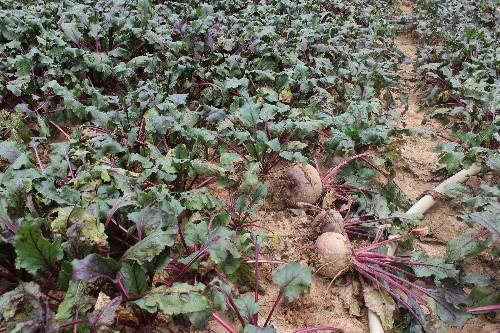 Điểm lại những nông sản khiến nông dân điêu đứng trong 3 tháng qua - anh 3